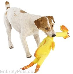 Rubber Chicken