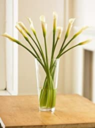 Long-Stemmed Calla Lilies