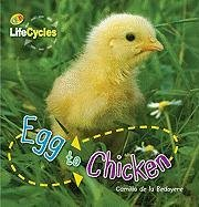 Egg to Chicken (QEB Life Cycles)