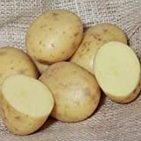 Isle of Jura 2kg Maincrop Seed Potatoes