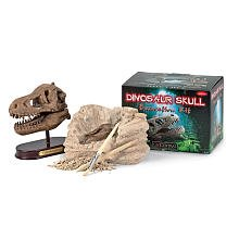 GeoCentral Excavation Dig Kit: Dino Skull