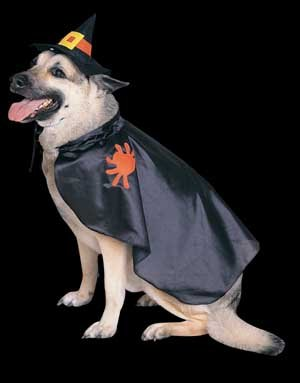 Witch Pet Costumes Halloween Costumes for Pets