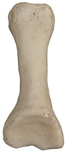 Real Human Finger Bones - Intermediate Phalange (Natural Bone)