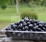 【無農薬】冷凍ブルーベリー(加工用)1kg ランキングお取り寄せ