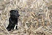 GHG Ground Force Hunting Dog Blind (Avery KW-1)