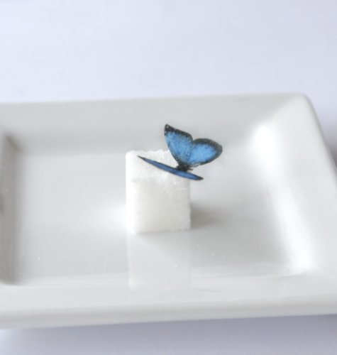 Edible Butterflies © - Mini Assorted Blue Set Of 48 - Cake And Cupcake Toppers, Decoration front-323053