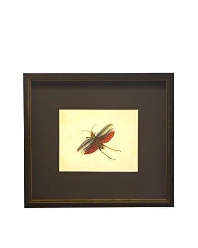 Matted Orange & White Moth Copper/Black Shadowbox Art