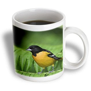 Danita Delimont - Birds - Baltimore Oriole Bird On Tree Fern, Costa Rica - Na02 Rnu0004 - Rolf Nussbaumer - 15Oz Mug (Mug_84198_2)