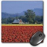 danita-delimont-farms-washington-state-skagit-valley-tulip-farm-us48-dbn0038-david-barnes-mousepad-m