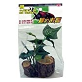 SANKO 緑のお皿 クワガタ カブトムシ 昆虫ゼリー エサ皿 16g用
