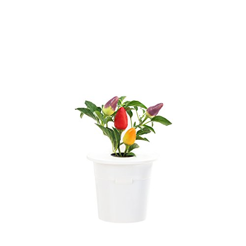 click-grow-chili-pepper-refill-3-pack-for-smart-herb-garden