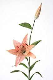 DIY Flower Sonia Celadon Oriental Hybrid Lily with Blooms (Set of 12)