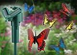 Solar Flying Fluttering Butterfly
