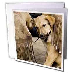 Danita Delimont - Dogs - Oregon, Seneca, Ponderosa