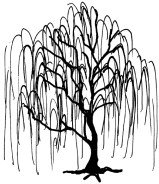 how to draw a weeping willow tree easy