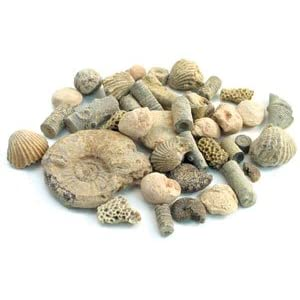 Fossil Sorting Kit
