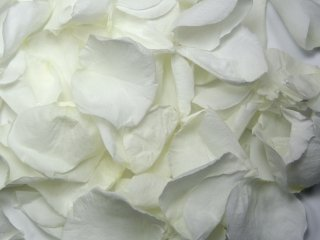 8 Cups Freeze Dried Wedding Preserved Rose Petals WHITE -180 petals -1.5 oz