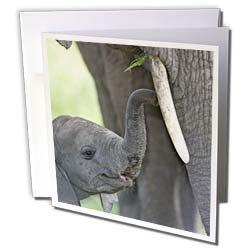 Danita Delimont - Elephants - African elephant