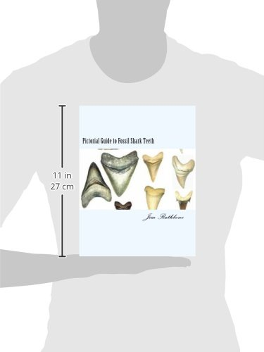 Pictorial Guide to Fossil Shark Teeth: Shark Teeth From around the World | ToolFanatic.com