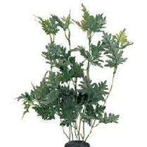 Silk Plant Houttoynia Difoemis  30cm