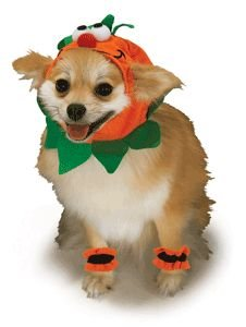 Pumpkin Headpiece and 4 Paw Cuffs Pet Costume