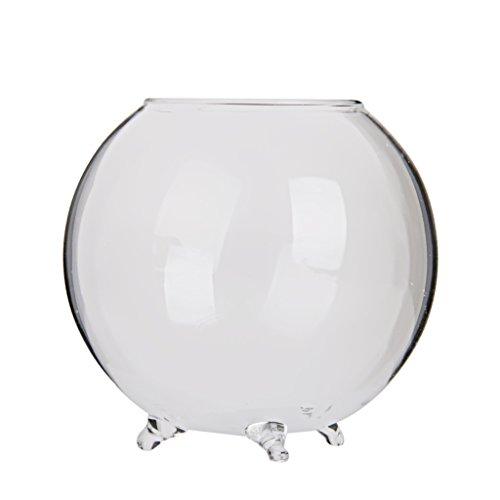 Vase boule en verre transparent pour plante fleur hydroponique diy paysage miniature les - Boule en verre pour plante ...