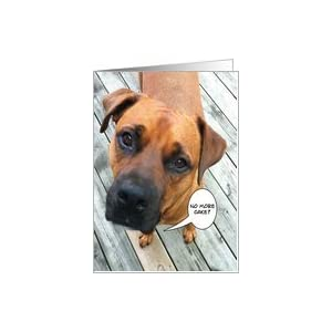Amazon.com: Dog late for birthday cake Card: Health & P