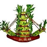 Plants Guru Lucky Bamboo Boat Arrangement