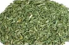 Rue ~ 1 Oz ~ Dried Herb ~ Ravenz Roost herbs