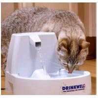 Drinkwell Water Fountain for Cats & Small Dogs