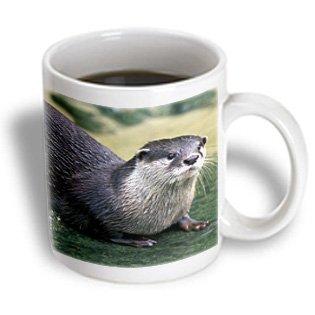 3Drose Peru, Manu River Region Giant River Otter Wildlife - Gavriel Jecan, Ceramic Mug, 11-Oz