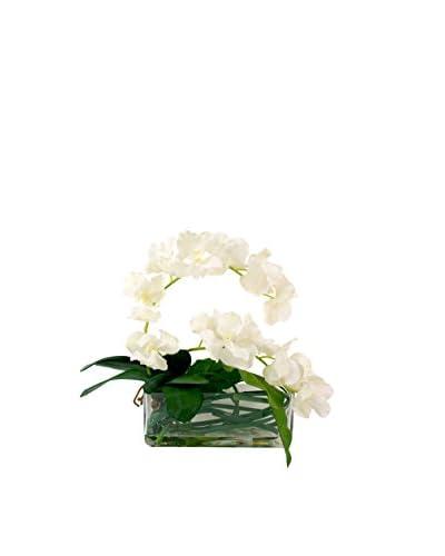 Creative Displays Vanda Orchid Water Floral, White/Green