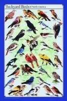 Laminated Backyard Birds Poster 24x36 Shows Different Plumage
