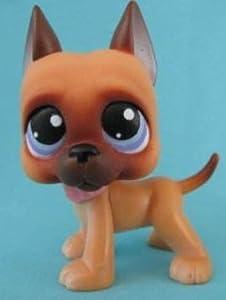 Amazon.com: Great Dane Puppy Dog # 244 (caramel brown with blue eyes