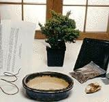 Bonsai Boy's Starter Kit - Juniper Procumbens Make Your Own Bonsai Tree