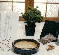 Bonsai Boy's Starter Kit - Juniper Procumbens Make Your Own Bonsai Tree