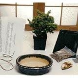 Bonsai Boy's Starter Kit - Juniper Procumbens Make Your Own Bonsai Tree ~ Bonsai Boy