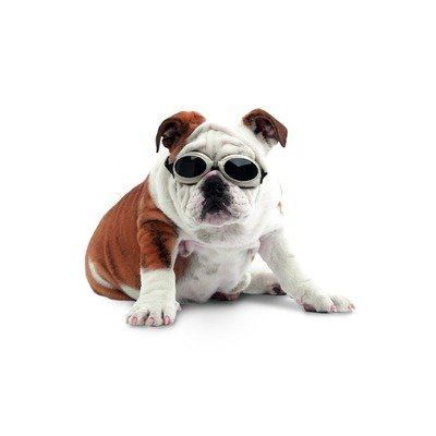 Dog Goggle Sunglasses with Skull & Crossbones & Smoke Lenses - Medium