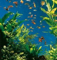 Tetra Wassertest 6-in-1 Fischszene