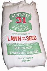 Kentucky 31 Tall Fescue Grass Seed- 25# Bag Ky31