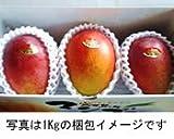 南風マンゴー園 宮古島産 完熟 アップルマンゴー 「美品」 1kg(約2~3玉) ランキングお取り寄せ