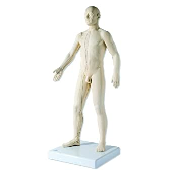 "3B Scientific N30 Acupuncture Male Model, 31.5"" x 11.4"" x 10.2"""