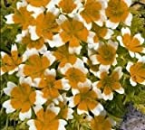 Just Seed - Flower - Limnanthes douglasii - Poached Egg Plant - 250 Seeds