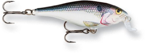 Today Rapala Shallow Shad Rap 05 Fishing lure (Shad, Size- 2.5)  Best Offer