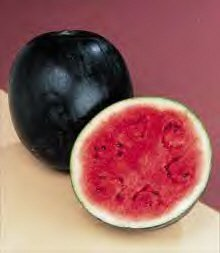 premier-seeds-direct-wml05-water-melon-sugar-babe-finest-seeds-pack-of-80