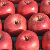 奥州市江刺産 減農薬減化学肥料りんご サンふじ 5kg (訳あり)【常温便 送料無料】 ランキングお取り寄せ