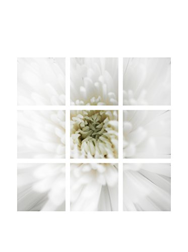 Art Addiction White Flower Close Up II Set of 9, Multi, 15.75