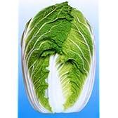 ストロングCR75[白菜]【タネ】コート小袋