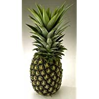 Sugarloaf Pineapple Plant - Ananas - Grow Indoors or Out