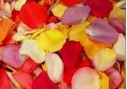 petalos-de-rosas-preservadas-portes-gratis